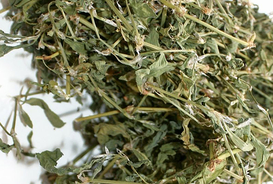 Rūgtis takažolė (žolelės arbatai)