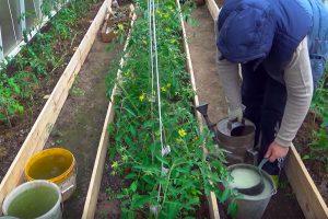 Cheminės priemonės ekologiniame sode