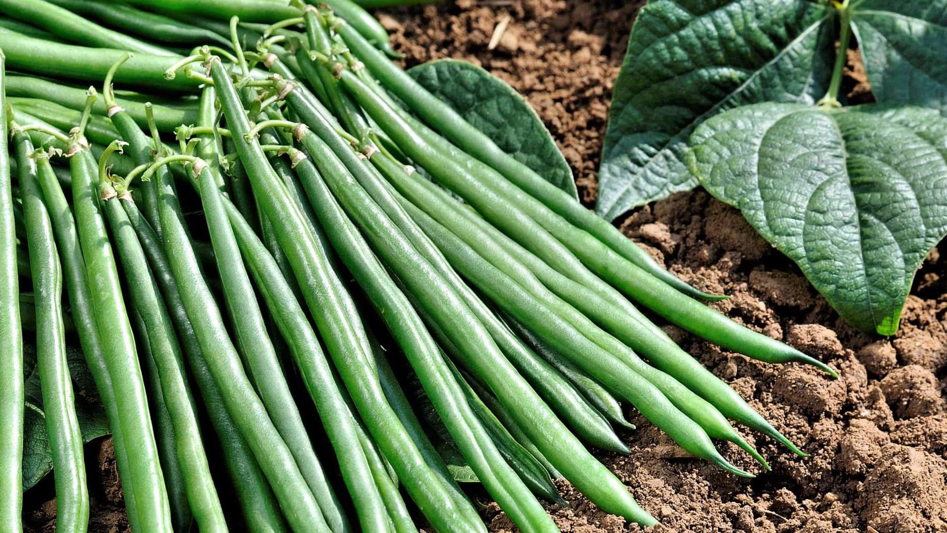 Žalios šparaginės pupelės