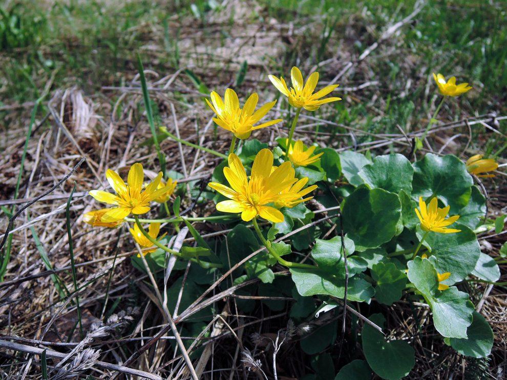 Pavasarinis Švitriešis