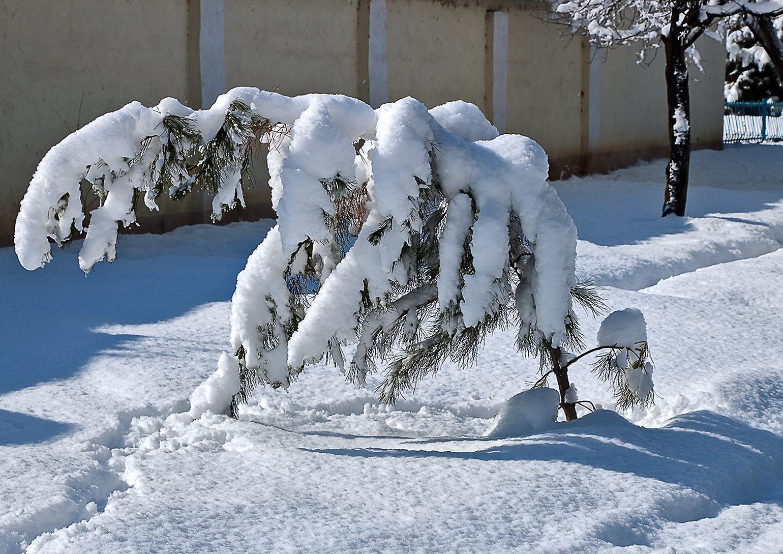 Sniego žala