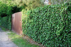 Gebenės tvora