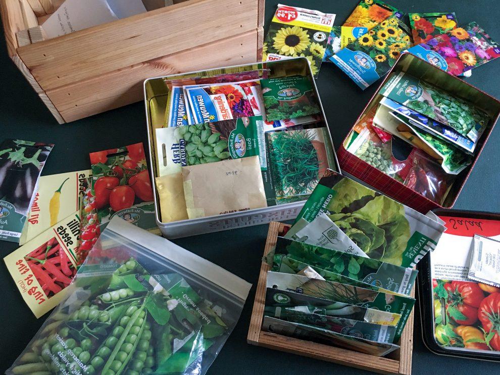 Daržovių sėklų daigumas