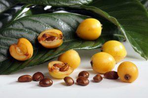 Japoninės lokvos vaisiai