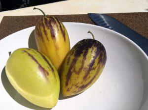 Pepino vaisius