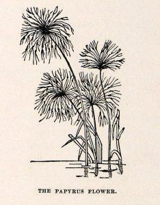 Viksvuolės botanikoje (papiruso augalas)