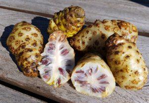 Indinės morindos vaisiai