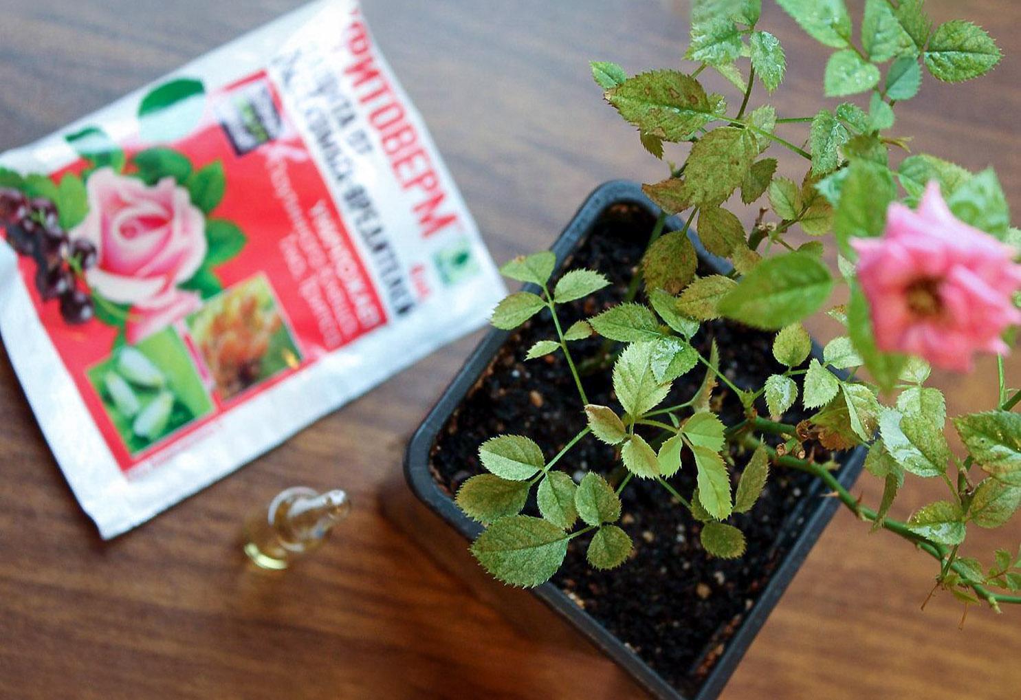 """Insekticidas """"Fitoverm"""" kambariniams augalams"""
