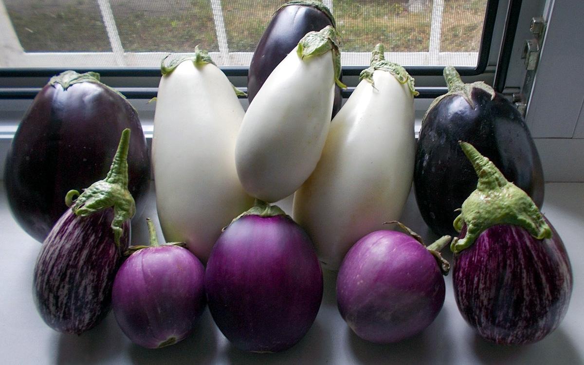 Mano daržo baklažanai