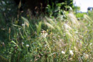 Medingi augalai (laukiniai)