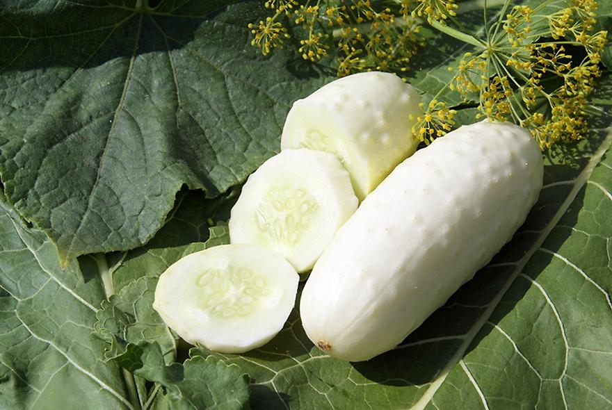 Balti agurkai