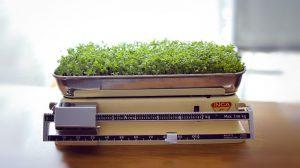 Žolės svoriui mesti