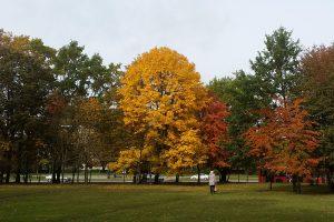 Kodėl rudenį pagelsta medžių lapai