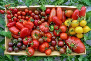 Lietuviškos pomidorų veislės