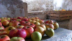 Obuoliai rūsyje žiemai