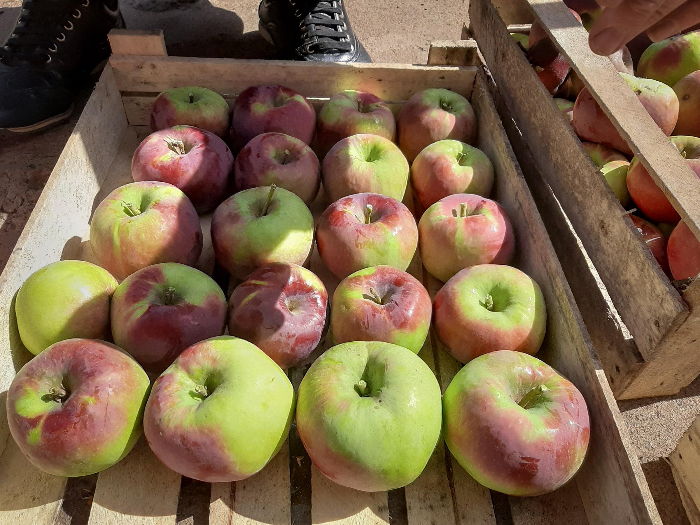 Obuoliai žiemai