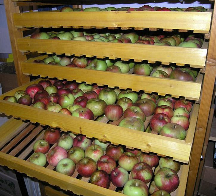 Obuolių saugojimas žiemai